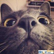 云养猫是什么意思,区块链云养猫教程